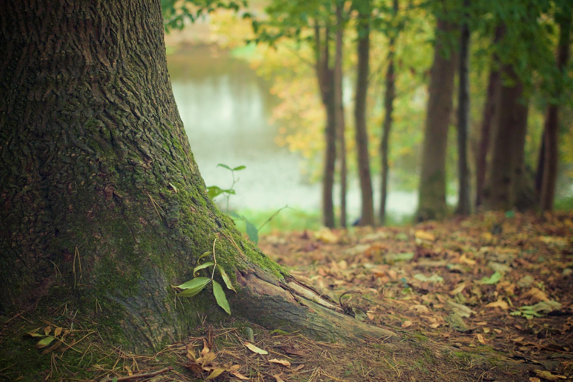 Tutkitusti totta: Metsä hoivaa mieltä